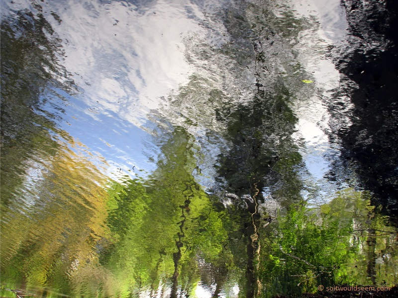 Reflections of trees and sky in a lake