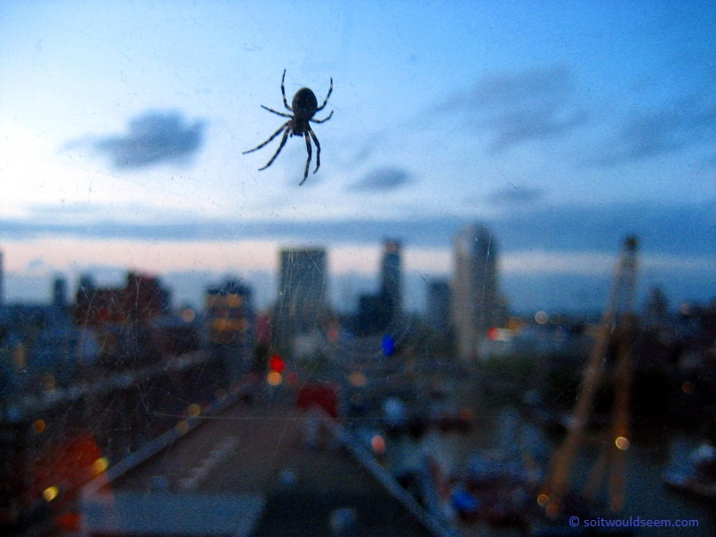 Queen of Rotterdam - Spider on the outside of a 14th floor window at the Golden Tulip hotel, Rotterdam, The Netherlands