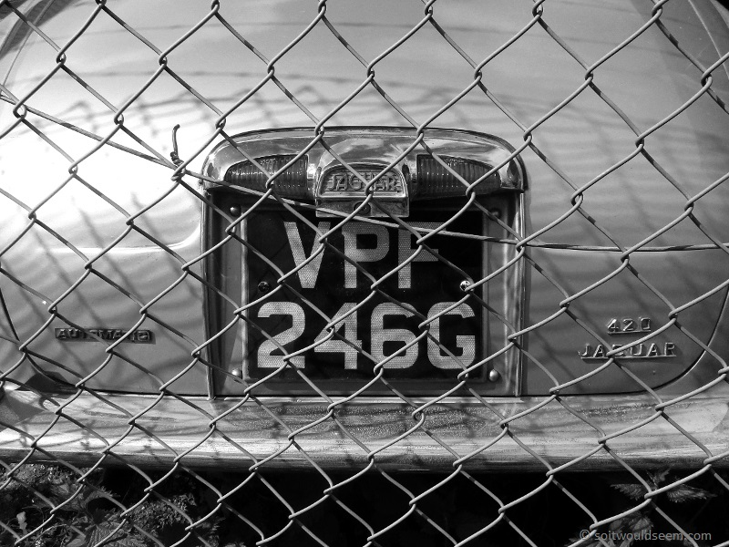 Caged Beast - a classic Jaguar rusting away behind a chain link fence