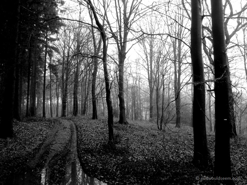 drielandenpunt netherlands forest winter
