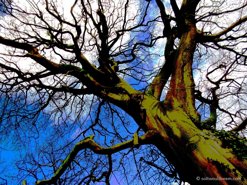 Generations - a tree at Speke Hall, posterised